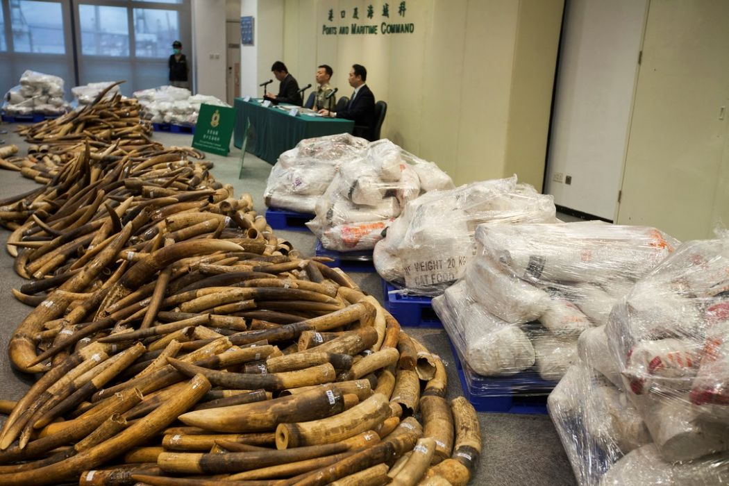 Massive haul of illegal ivory found in Hong Kong
