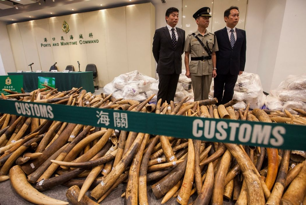 Elephant tusks valued at $9M seized in Hong Kong