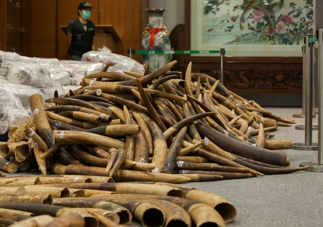 Hong Kong seizes US$9m worth of ivory in Malaysia shipment
