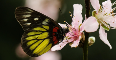 butterfly biodiversity hong kong