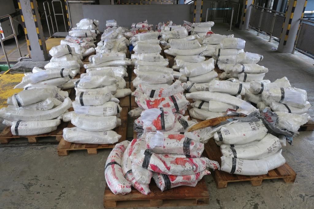 ivory smuggling seizure