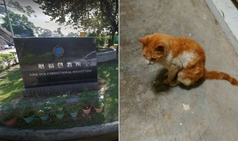 Tong Fuk Correctional Institution stray cats