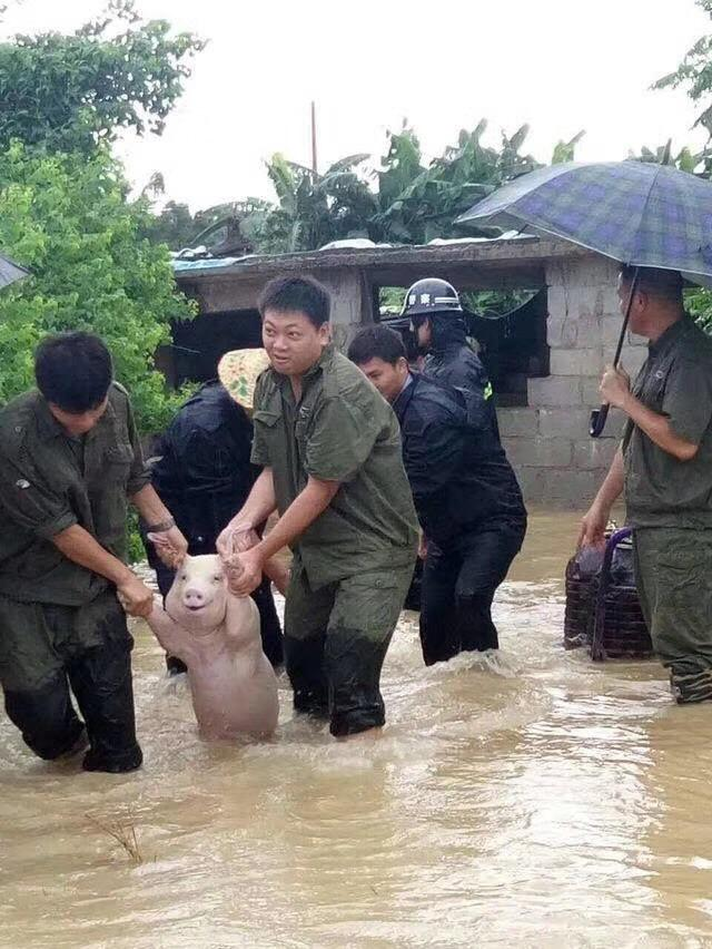 flood pig smiling