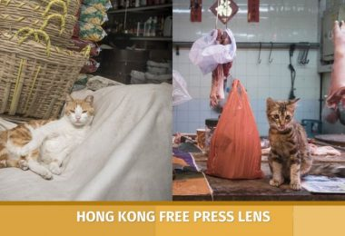 Hong Kong market cats