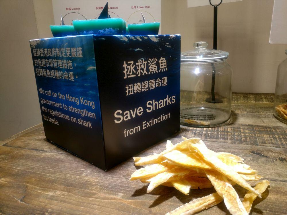 hk shark