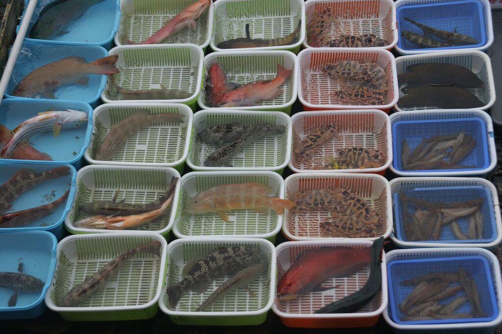 wet market threatened fish