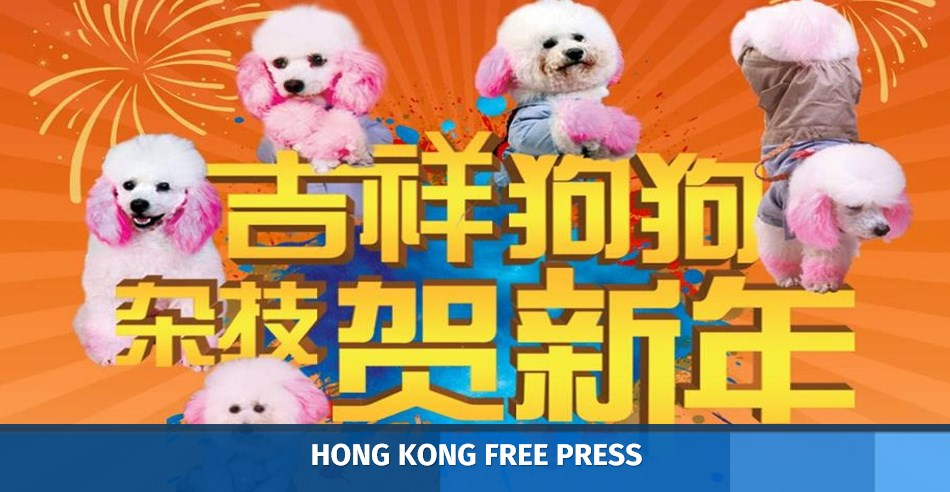 Singapore Dog Circus Cancelled After Outcry | Hong Kong Free Press HKFP