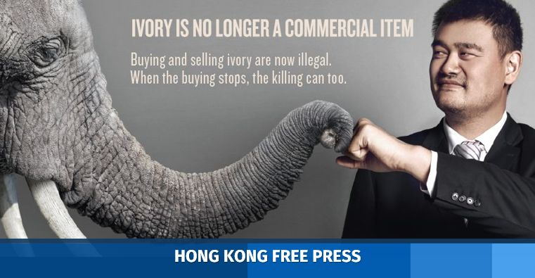 36c169be9 Basketball star Yao Ming joins calls to stop ivory trade