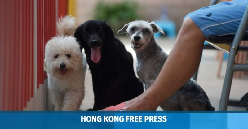 china pet dogs