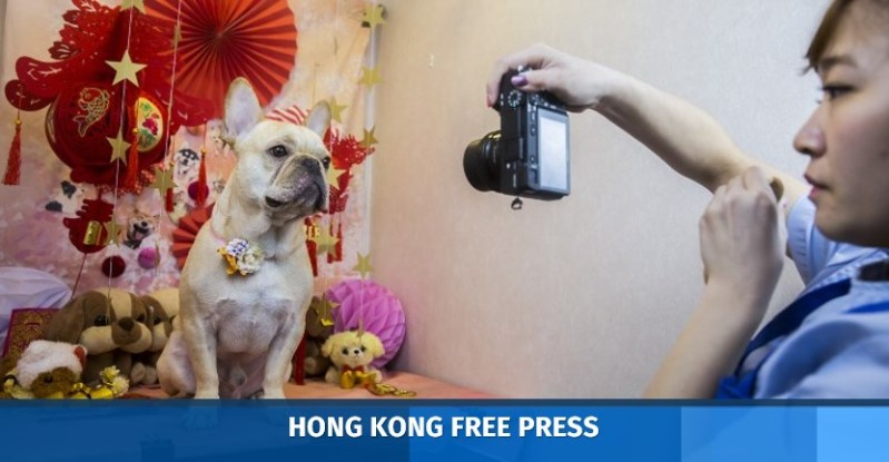 hong kong dogs