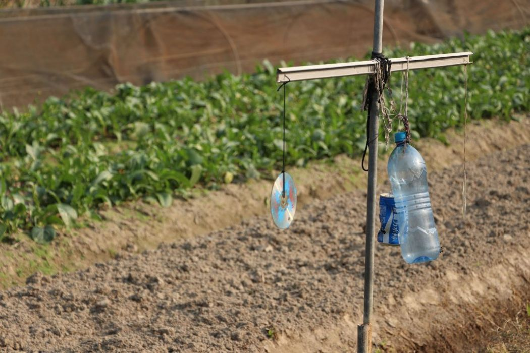 Back on the Farm: The future of agriculture in Hong Kong