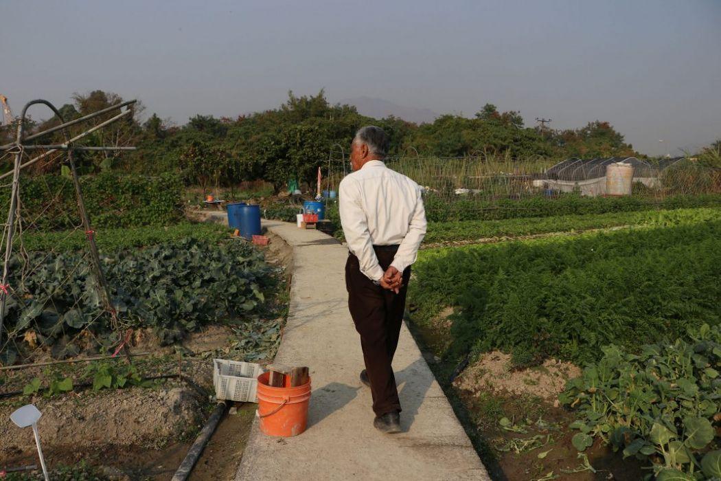 Farmer Leung Pun-kin