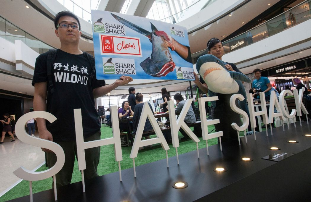 shake shack shark fin