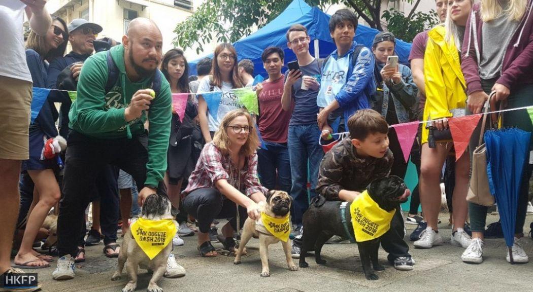 hong kong dog rescue race