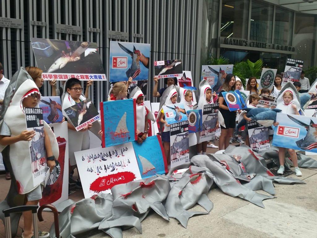 Maxim's shark protest wildiad