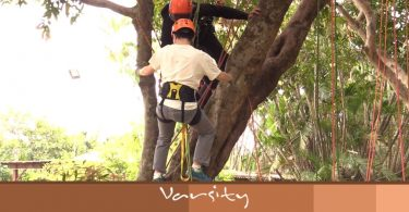climb hong kong Tree Surgeons