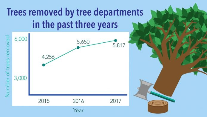 Tree removed 2017