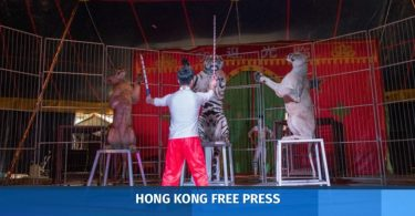 China circus animal