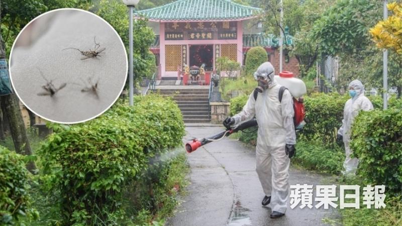 mosquitos Cheung Chau
