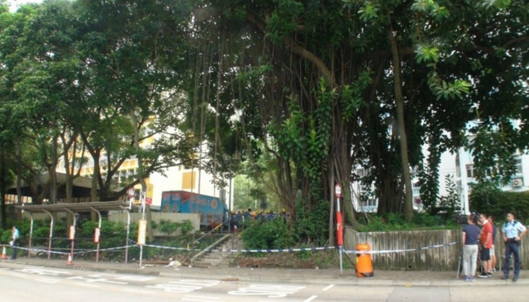 Kwun Tong Shun Lee estate falling branch death