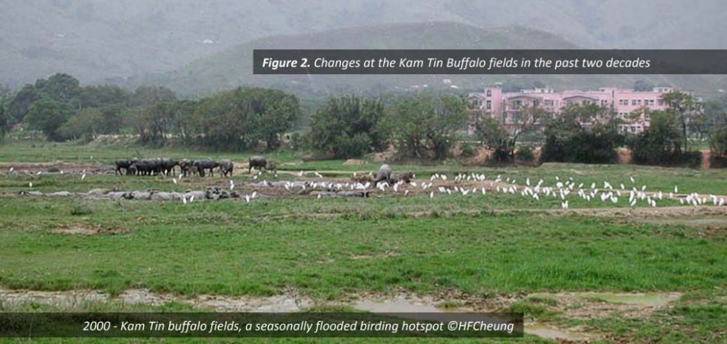 Kam Tin Buffalo Fields Bird Watching Society