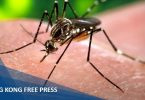 dengue fever mosquito feature image