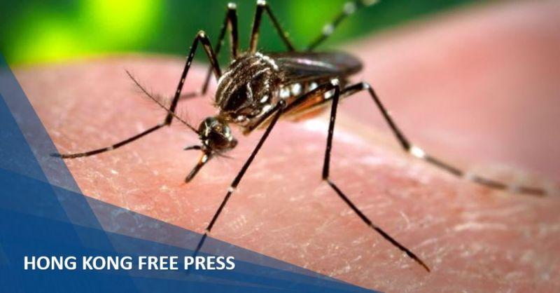 dengue fever mosquito feature image