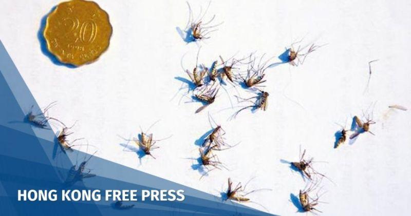 mosquito Cheung Chau