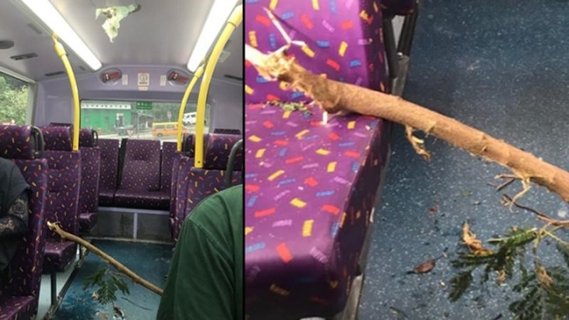 bus tree branch