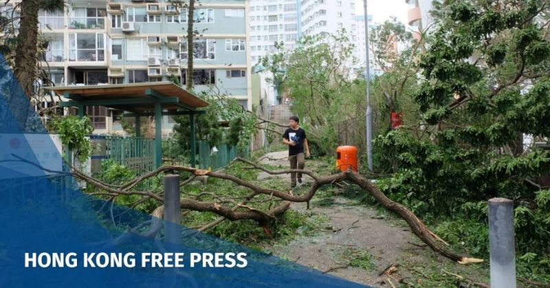 super typhoon Mangkhut trees
