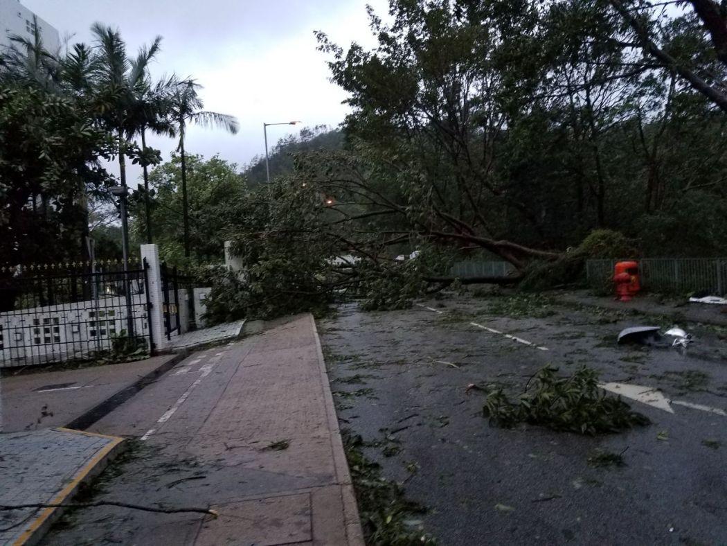 super typhoon tree fell