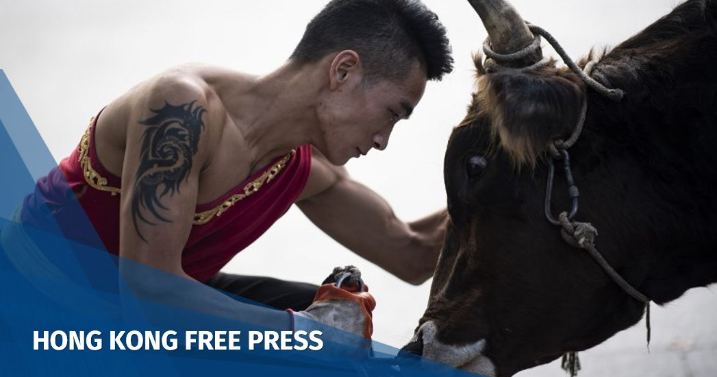 bull fight China