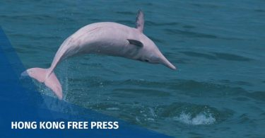 Chinese white dolphins