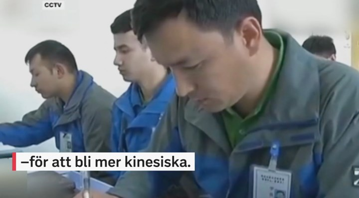 swedish tv xinjiang