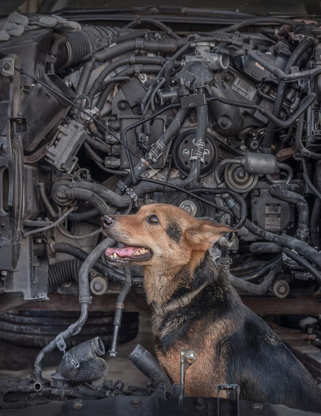 Canine Machine Marcel Heijnen