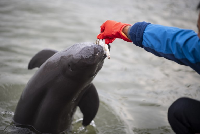 CHINA-ENVIRONMENT-CONSERVATION-ANIMAL-PORPOISE