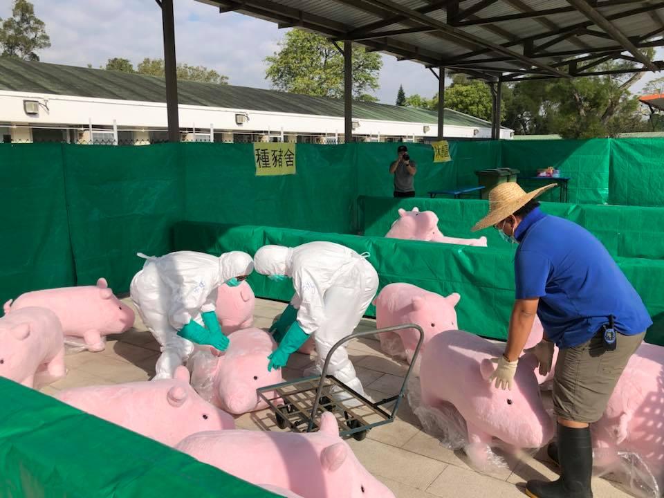 pig stuff animal exercise