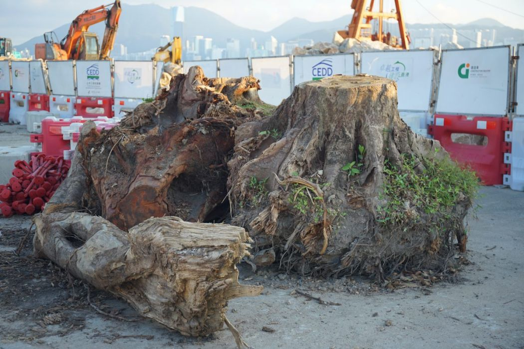 trees typhoon
