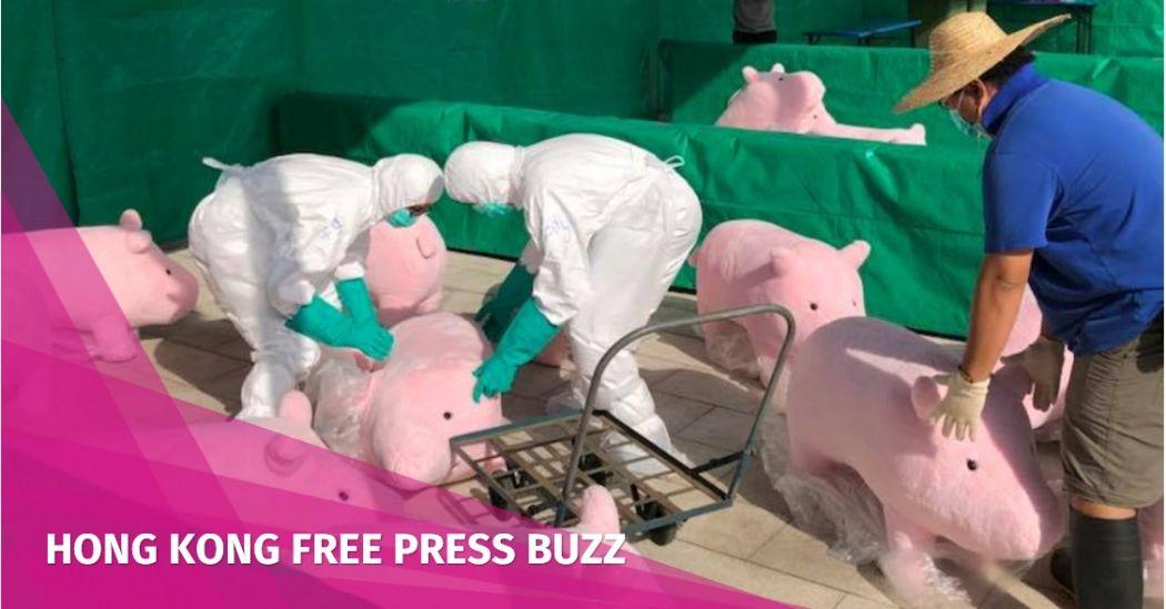 toy pigs swine flu