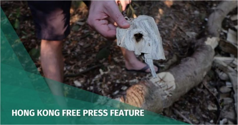 Lamma trees poachers