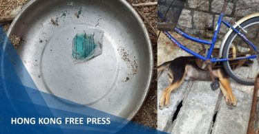 Cheung chau dog poisoning