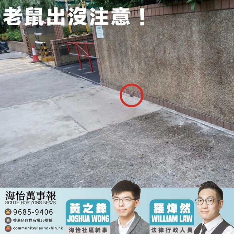 Joshua Wong rats South Horizons News