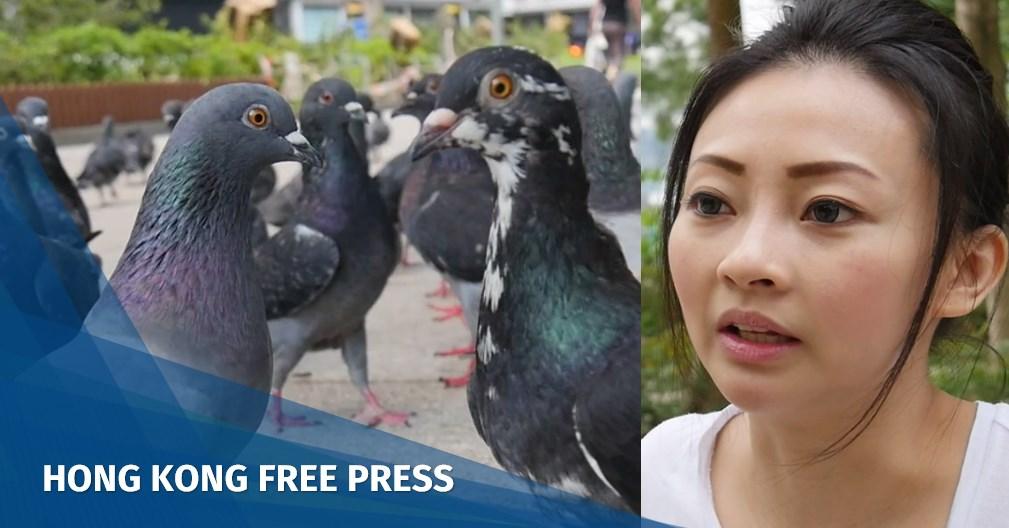 pigeon protectors hong kong humans (2)