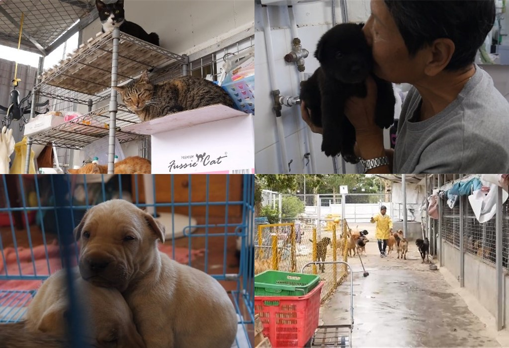 hong kong dog shelter