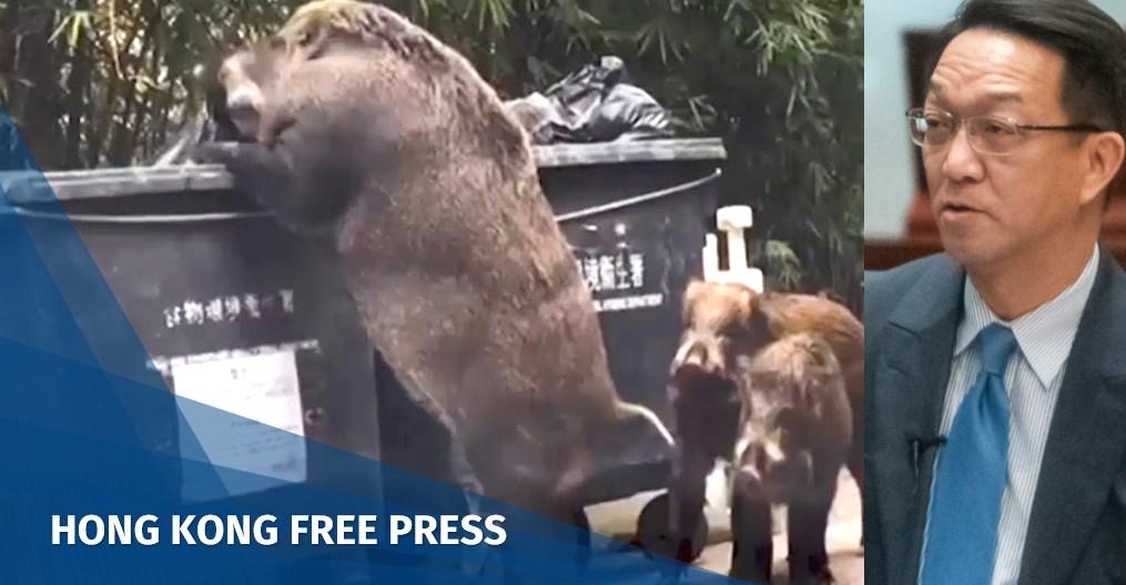Introduce hunters or natural predators to curb Hong Kong's wild pig population, says lawmaker | Hong Kong Free Press HKFP