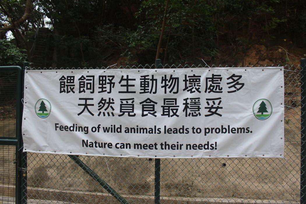 Celeng tidak diberi makan
