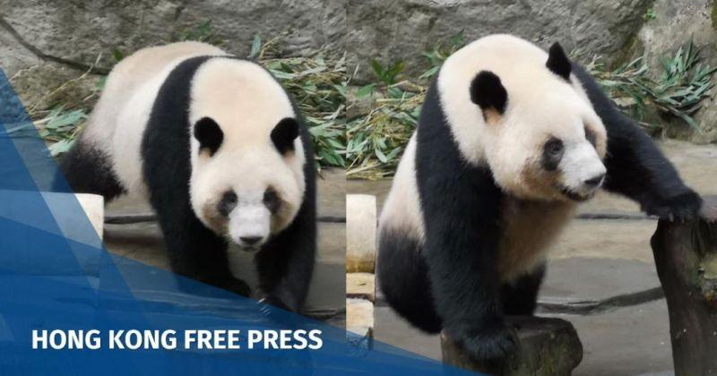 Panda Kaohsiung