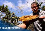 beekeeper Yip Ki-hok