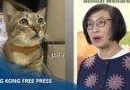 sophia chan cat
