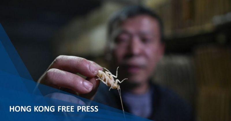 China cockroach